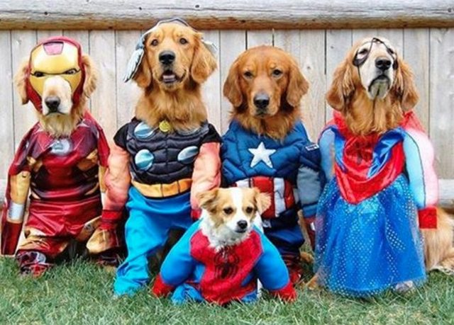 superhero-pets-MAIN